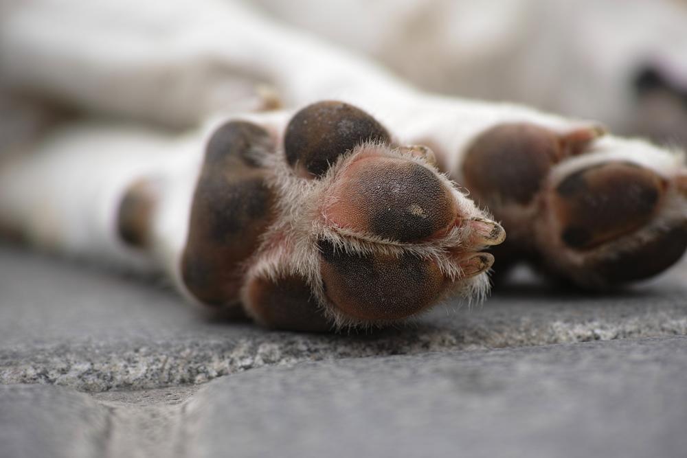 Muerte de perro en el aeropuerto de Nueva Zelanda que causó gran polémica